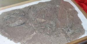 Repenomammus