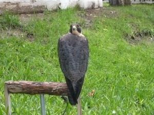Backwards birdie