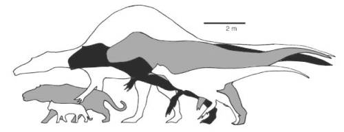 The giant theropods
