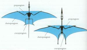 pteros-rhamps