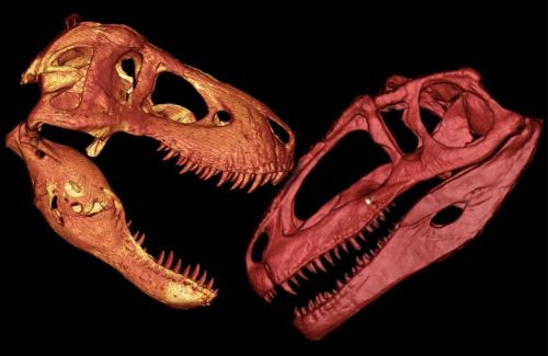 Tyrannosaurus vs Giganotosaurus