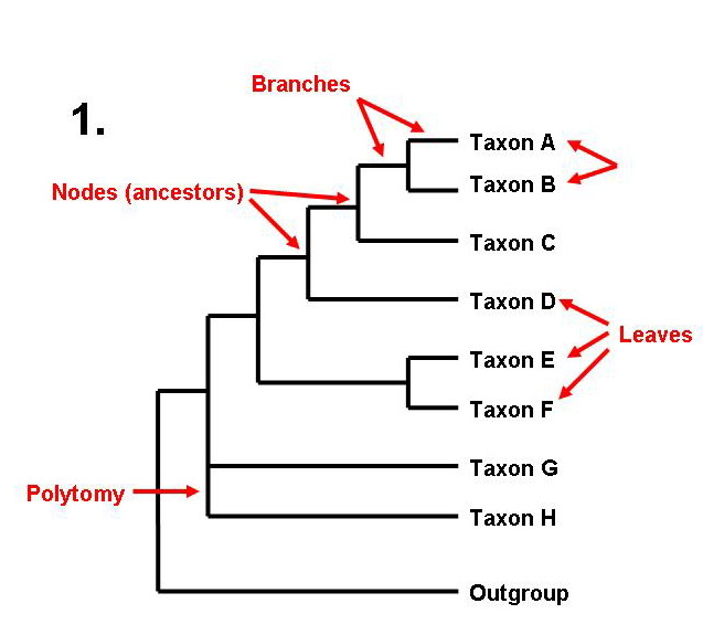 Classifications of Groups