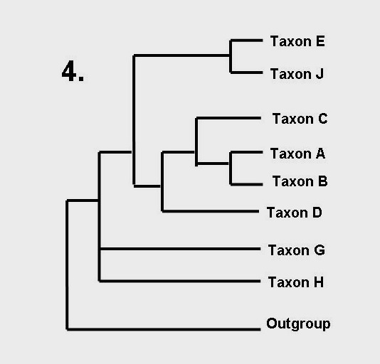 How to read a phylogenetic tree | Dave Hone's Archosaur Musings