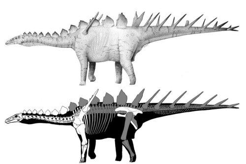 Miragaia reconstructions. Imgae courtesy Octavio Mateus.