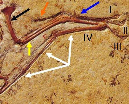 pterosaurs to birds december 2010