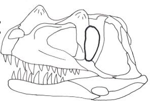 Ceratosaurus -  predatory