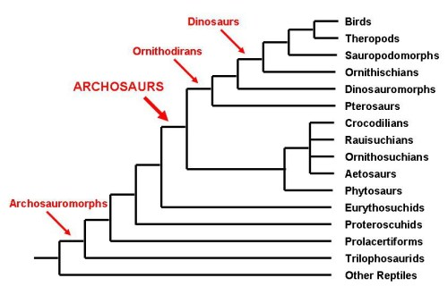 archosaurs tree