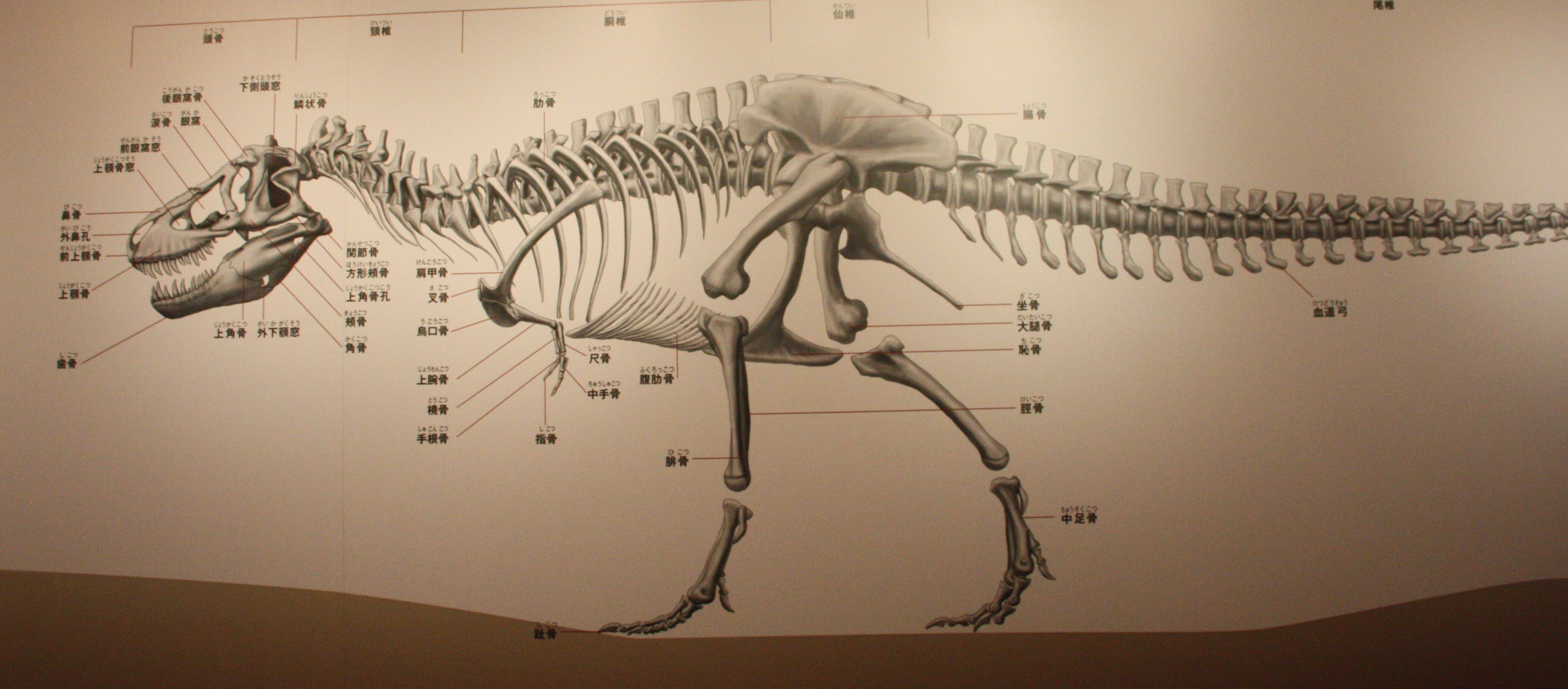 Sign of the times – dinosaur anatomy | Dave Hone\'s Archosaur Musings