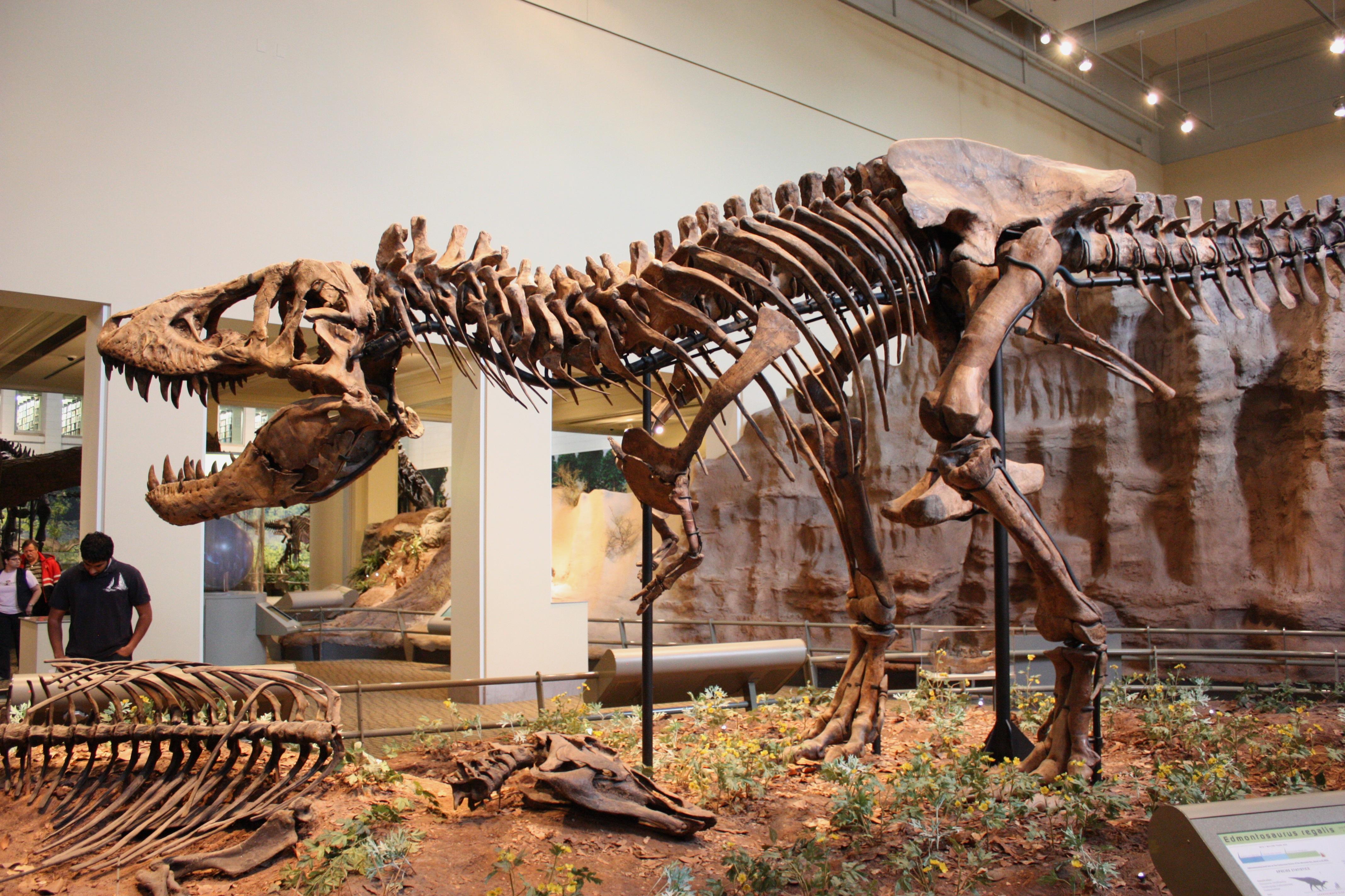 Tyrannosaurus dave hone 39 s archosaur musings for Tyrannosaurus