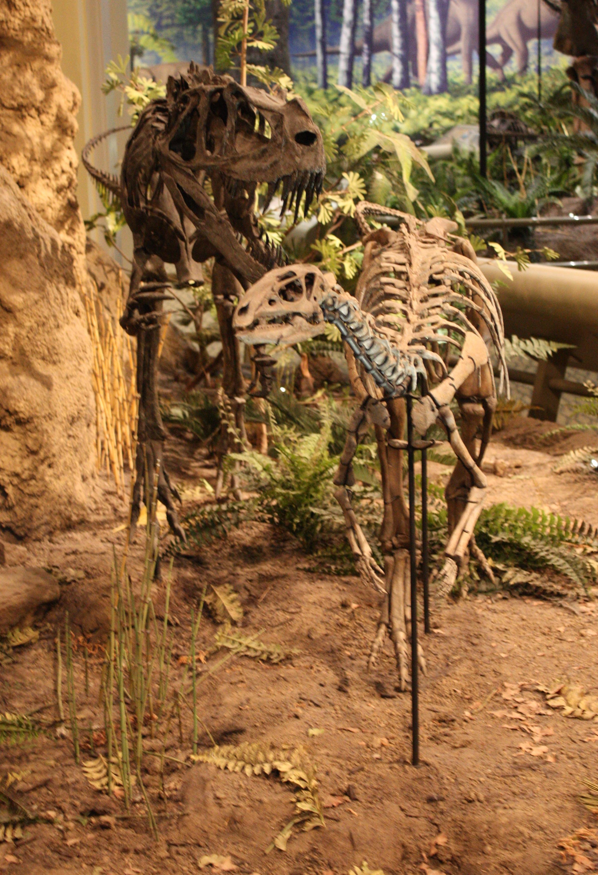 Ceratosaurus And Dryosaurus Laquo Dave Hones Archosaur Musings