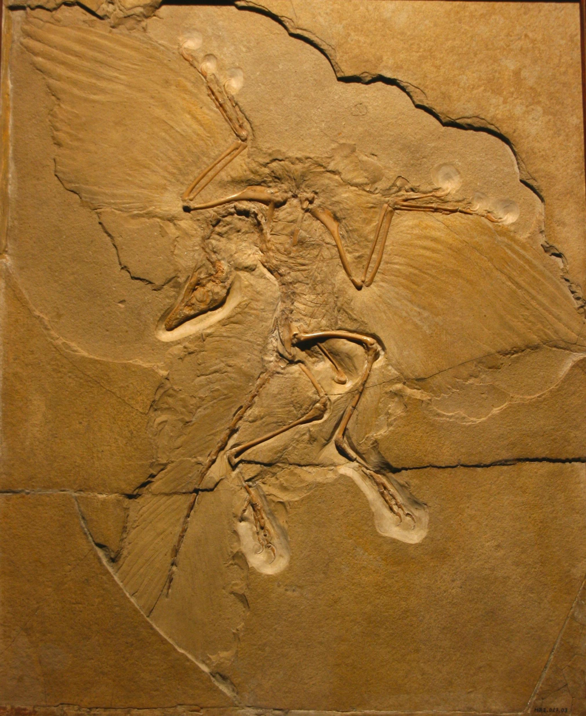 archaeopteryx | Dave H... One Leg Leg Press