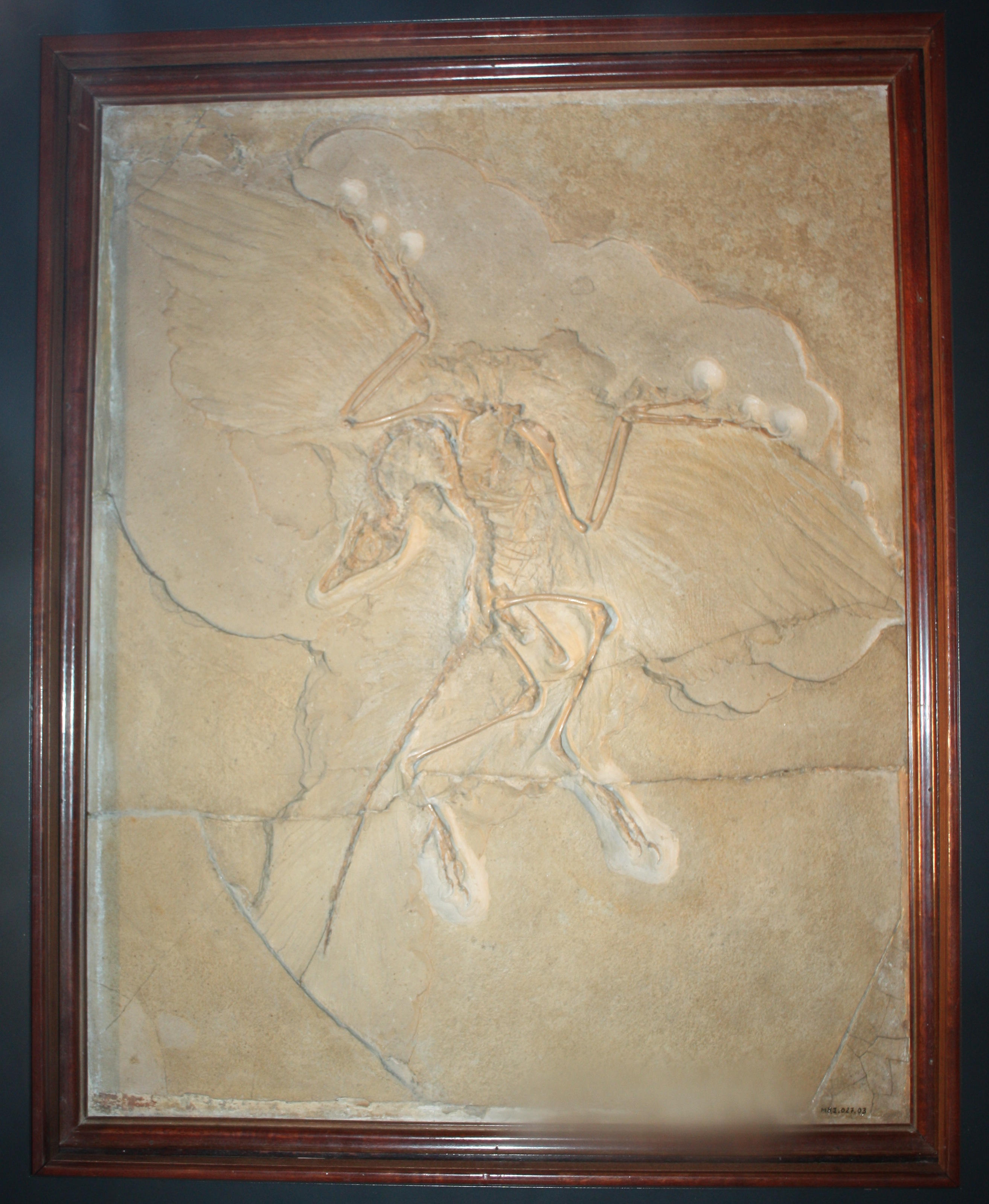 What was archaeopteryx and why was it important?