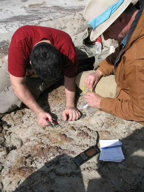 Dave and Darren take out a tyrannosaur tooth
