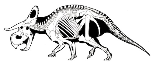 Nasutoceratops skeletal drawing by Lukas Panzarin