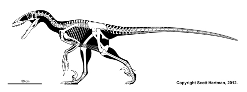 Deinonychus4article
