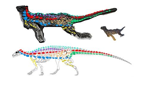 scelidosaurus WIP
