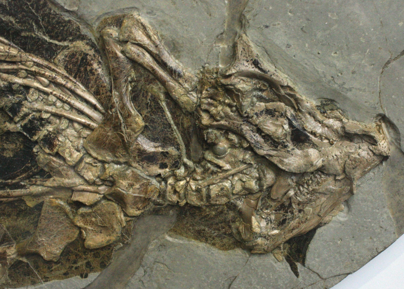 paleontology research papers In addition to challenging depictions of dino tongues, the research proposes  a  new paper in the journal of evolutionary biology reviewed all.