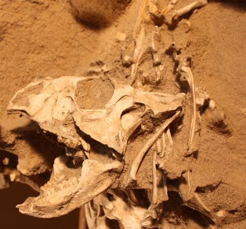 C skull II