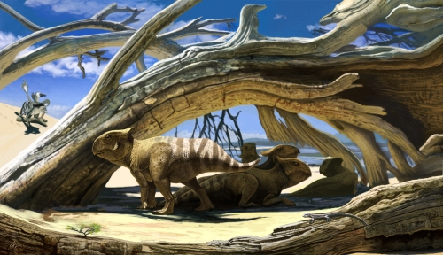 Protoceratops final artwork01