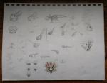 Proto Sketches